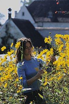 Blumengarten Kartause Ittingen