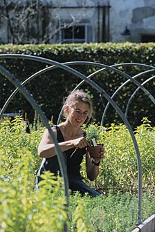 gärtnerin imKräutergarten Kartause Ittingen