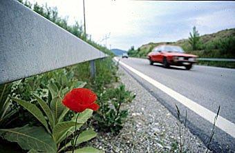 Ruderalflora am Strassenrand