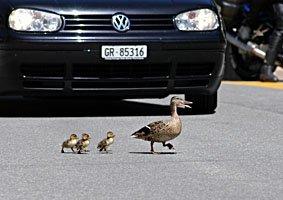 Entenfamilie