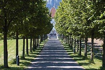 Baumalee zum Schloss Waldegg bei Solothurn