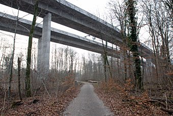 Auenwald unter der Autobahnbrücke bei Schinznach