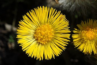 Ruderalflora