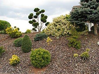 Gartengestalltung mit Ziersträuchern in Hemishofen