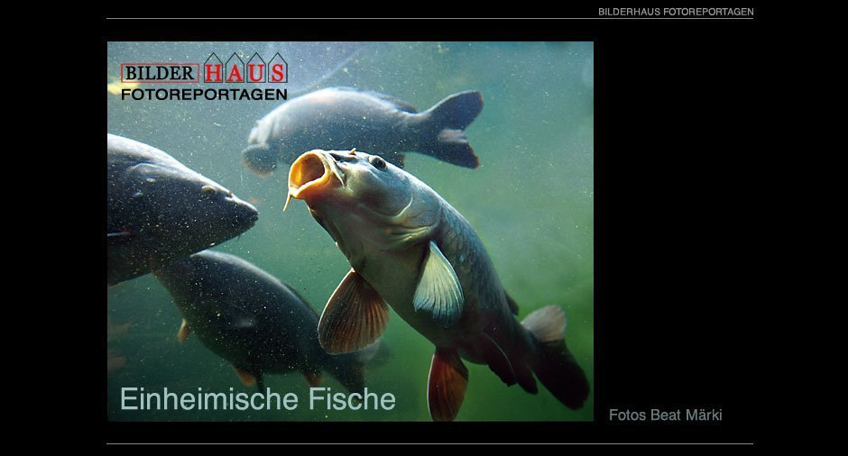 fische_001_Titel