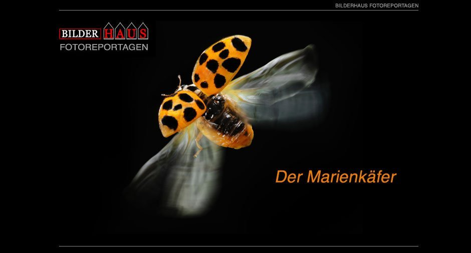 marienkaefer_001