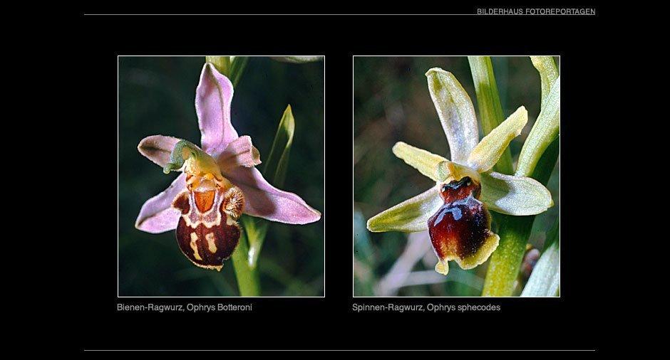 orchideen_001