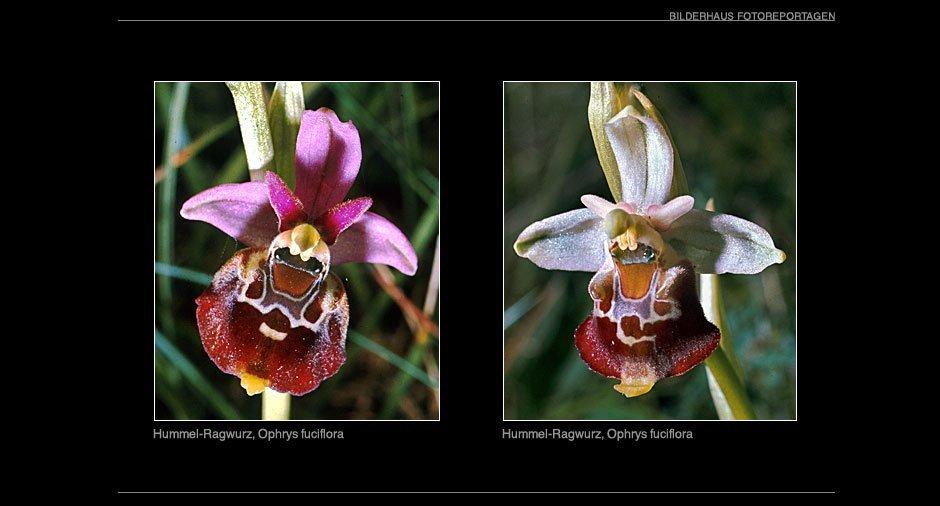 orchideen_003