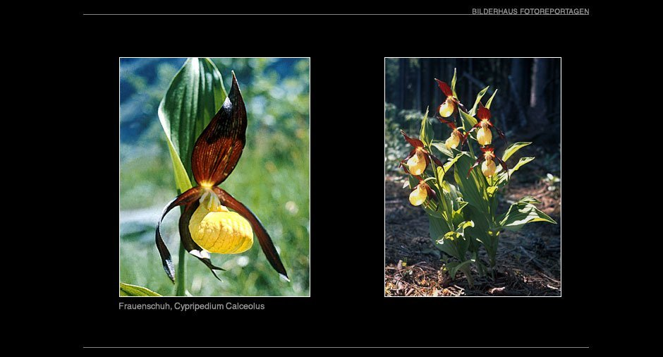 orchideen_004