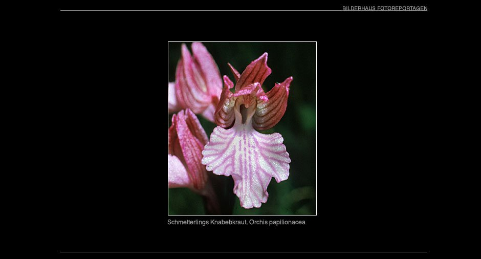 orchideen_005