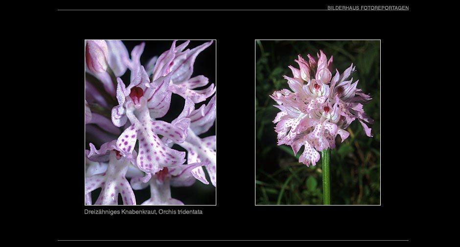orchideen_007
