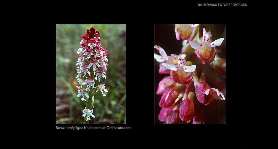 orchideen_008