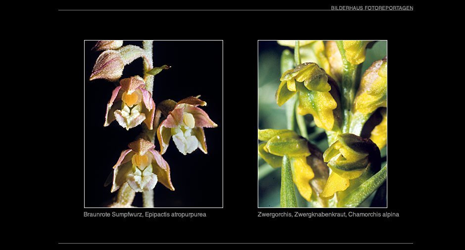 orchideen_009