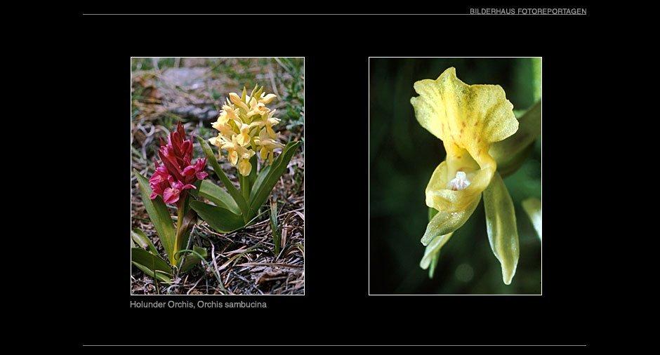orchideen_010