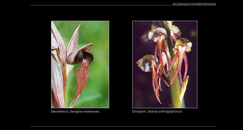 orchideen_011