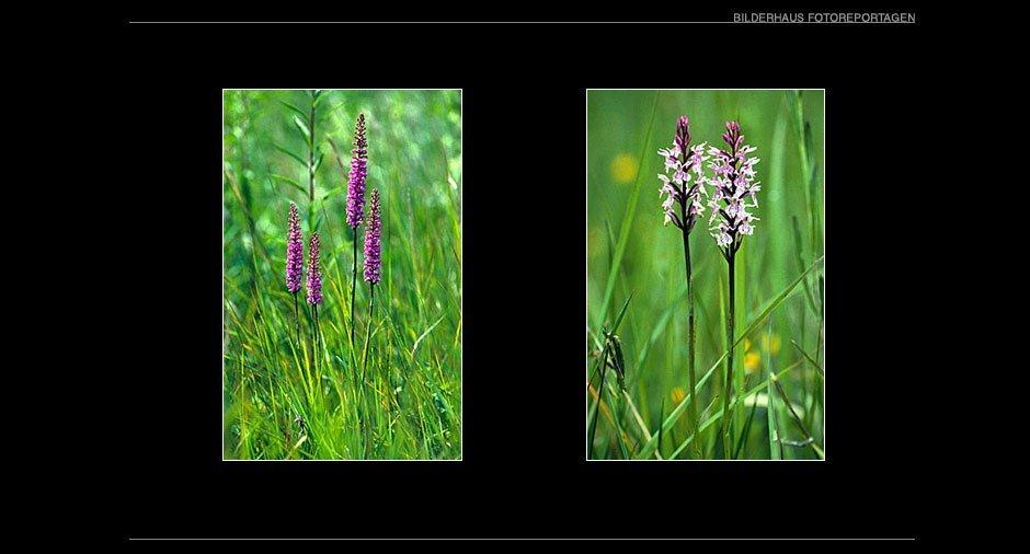 orchideen_012