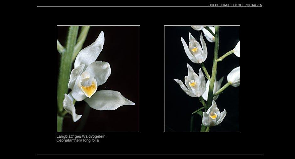 orchideen_014