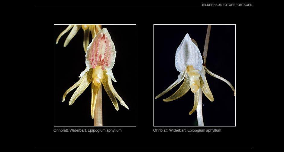 orchideen_015