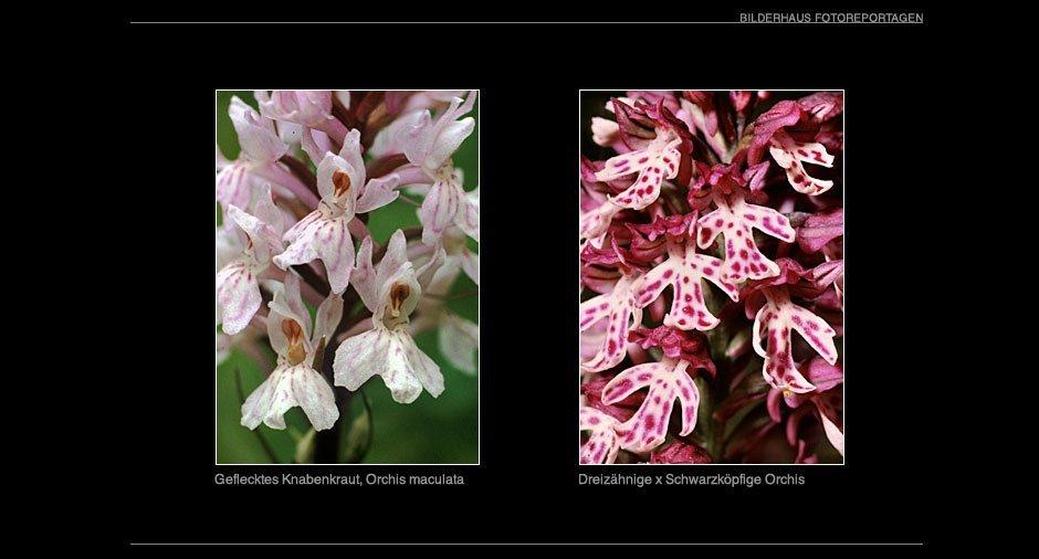orchideen_016