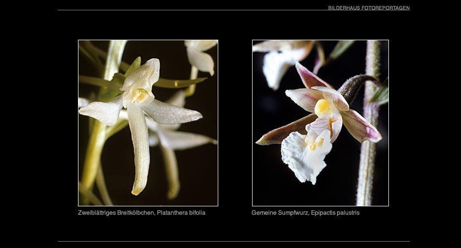 orchideen_017