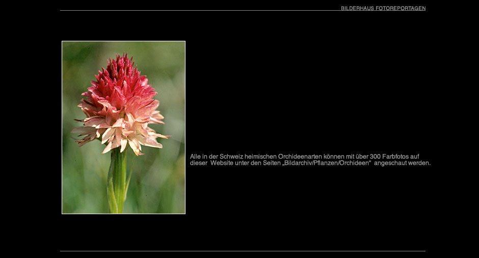 orchideen_018