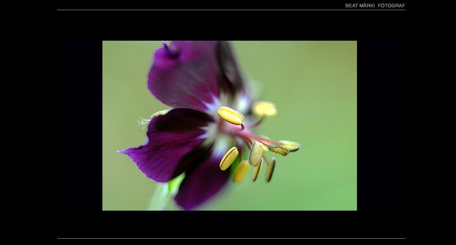 Natur_19