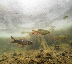 Fische unter dem Eis 2
