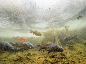 Fische unter dem Eis 3
