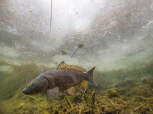 Fische unter dem Eis 4