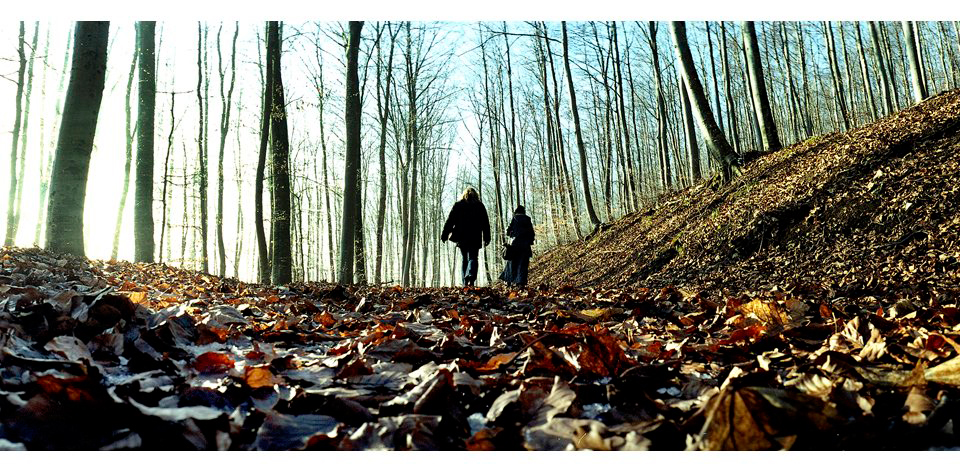 Wälder_001