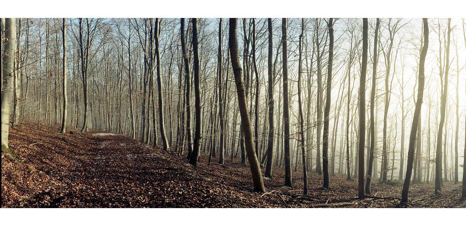 Wälder_002