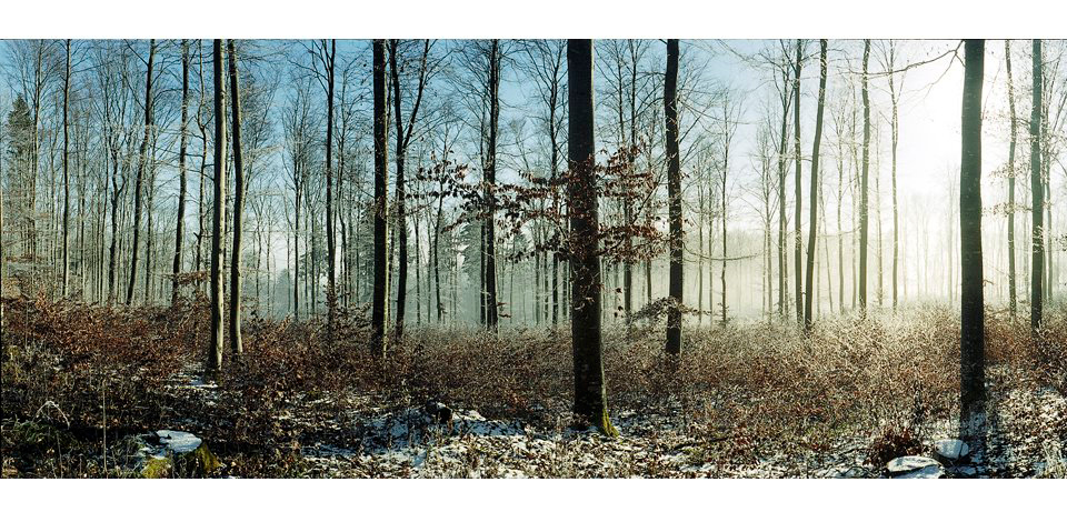 Wälder_003