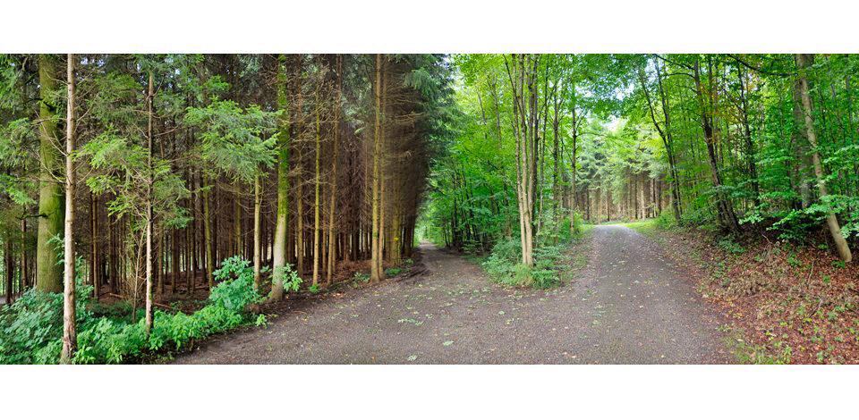 Wälder_005