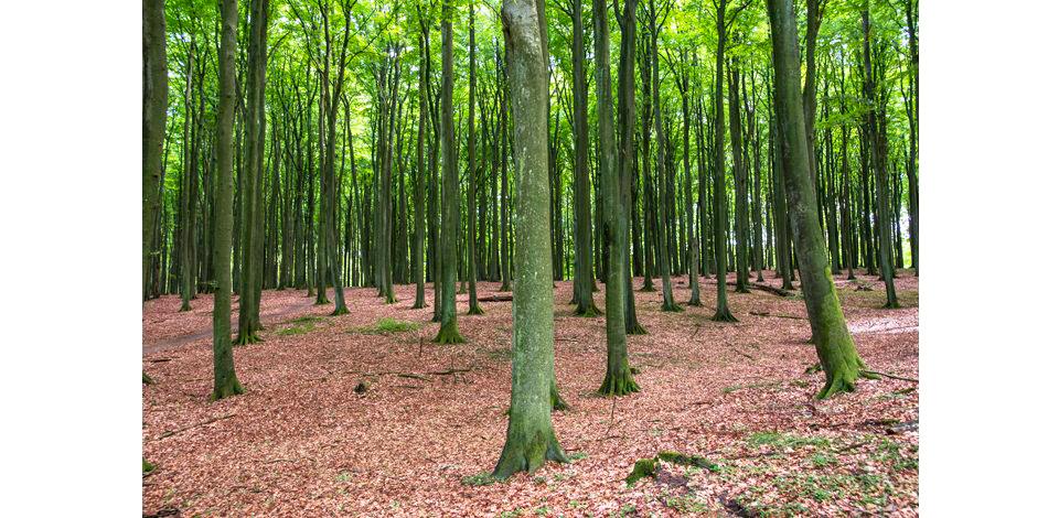 Wälder_007