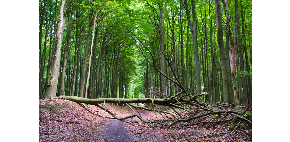 Wälder_008