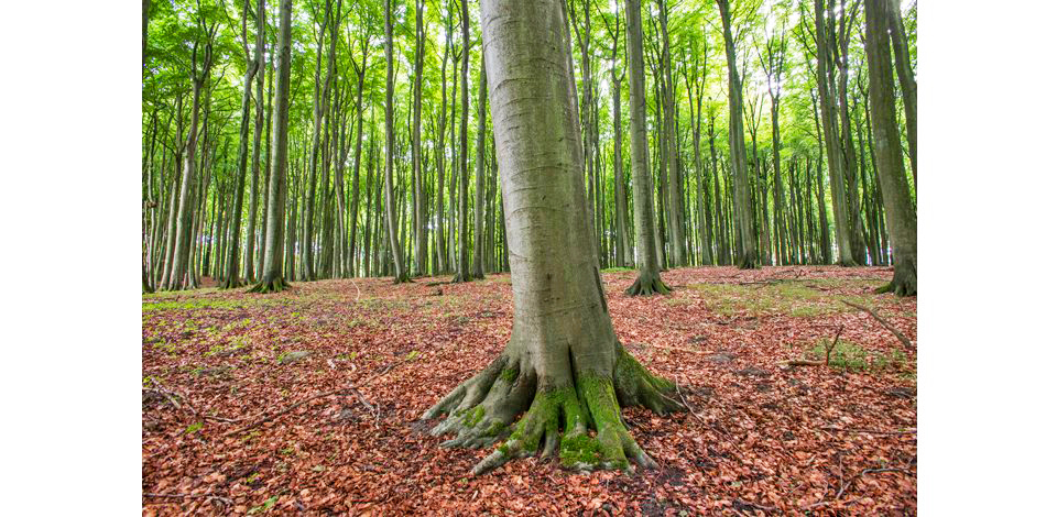 Wälder_009