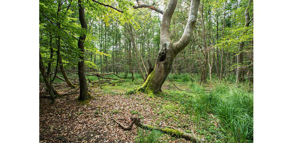 Wälder_010
