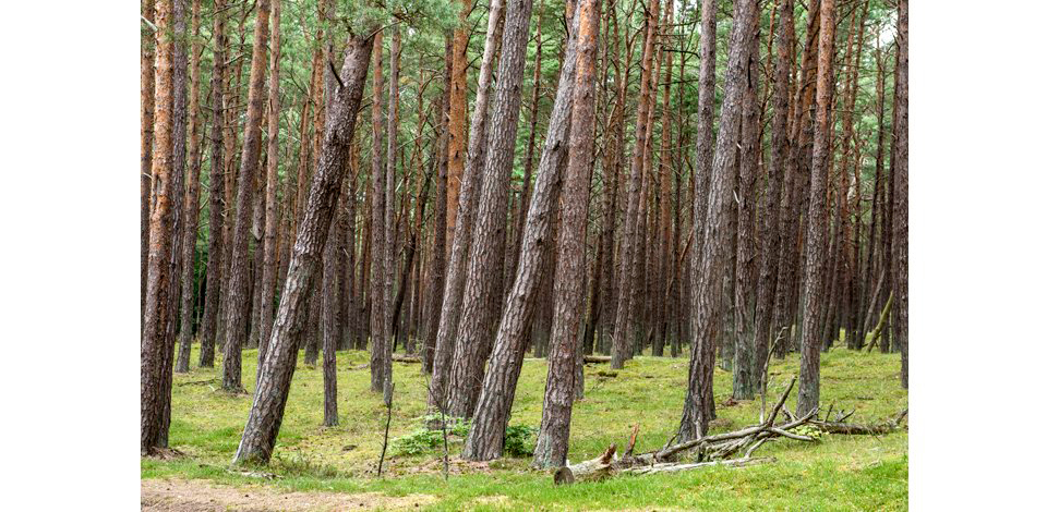 Wälder_012