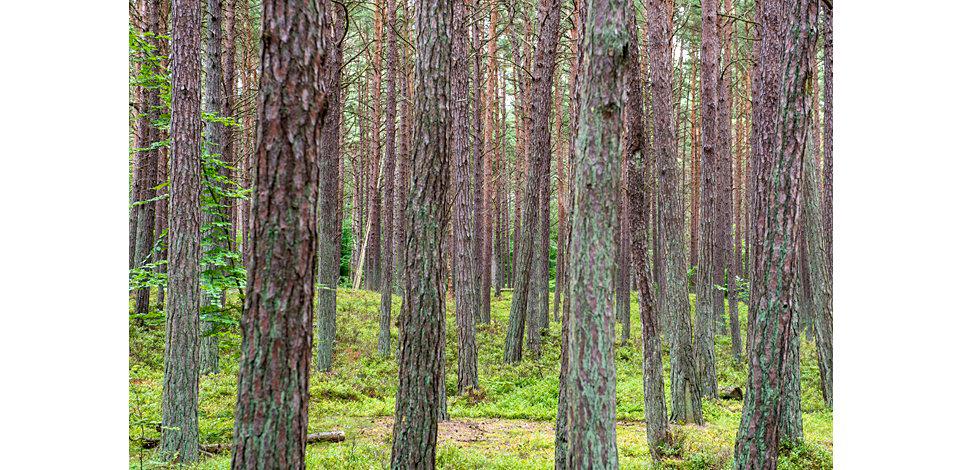 Wälder_013