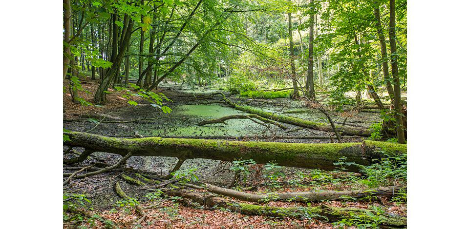 Wälder_015