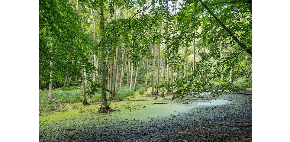 Wälder_016