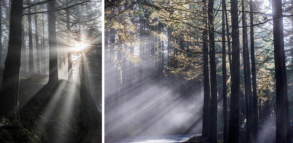 Wälder_021