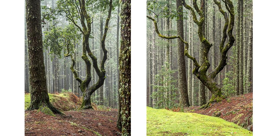 Wälder_025