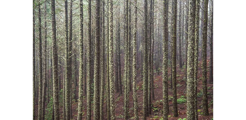 Wälder_026