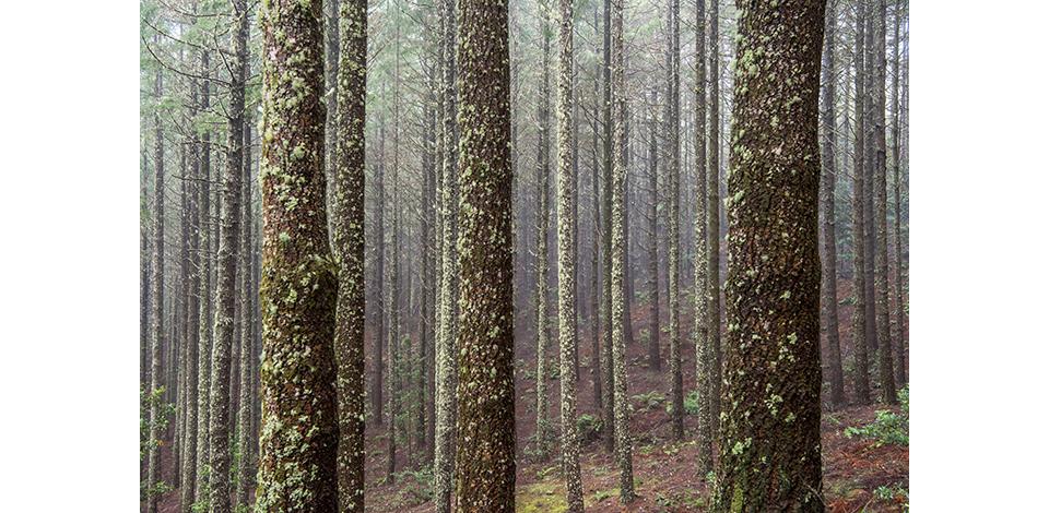 Wälder_027