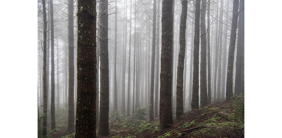 Wälder_028