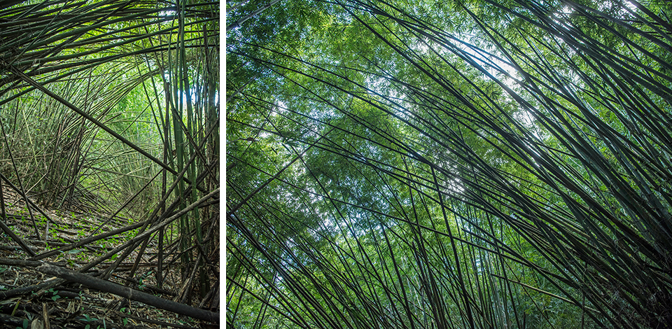 Wälder_029